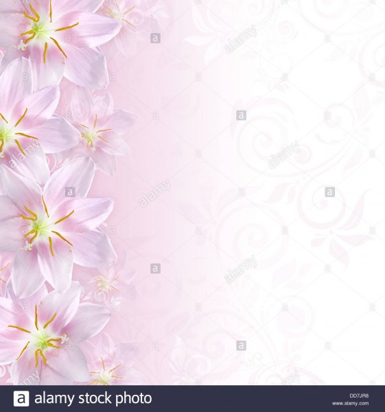 Greeting Or Invitation Card Background With Pink Lily Flowers