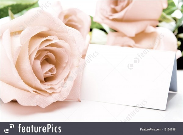 Flowers  Pink Rose And Blank Card