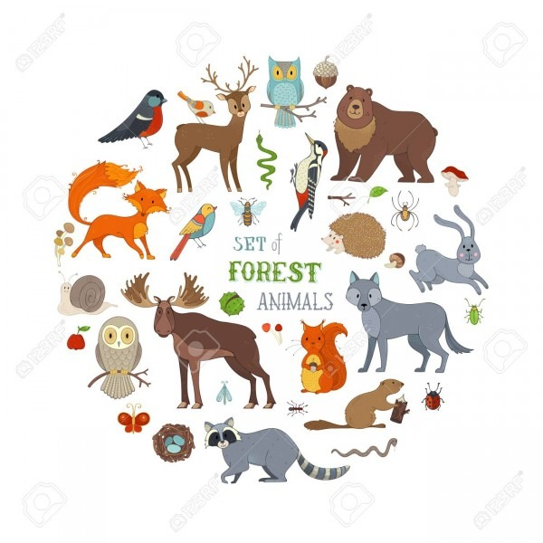 Hedgehog, Wolf, Beaver, Deer, Fox, Owl, Hare, Snail, Squirrel