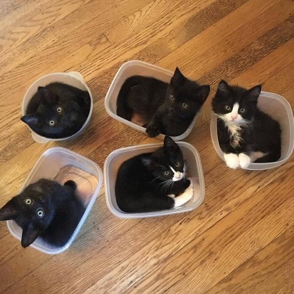 No One Was Interested In Her Tupperware Party, So Susan Invited
