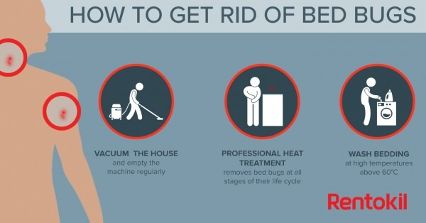 Bed Bug Bites  What You Need To Know